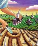 plantando-igrejas